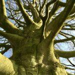 Groei als een boom
